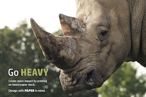 Photo of a rhinoceros